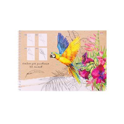 Альбом для рисования Проф-пресс Попугай и растения А4 40 листов