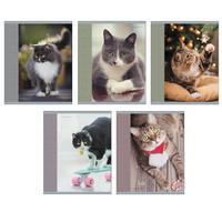 Тетрадь общая Канц-Эксмо Любимый кот А5 96 листов в клетку на скрепке (обложка в ассортименте)