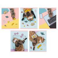 Тетрадь общая Канц-Эксмо День кота А5 48 листов в линейку на скрепке (обложка в ассортименте)
